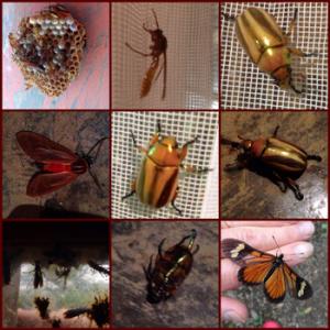 debra-bedroom-bugs